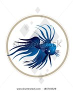 Blue beta fish